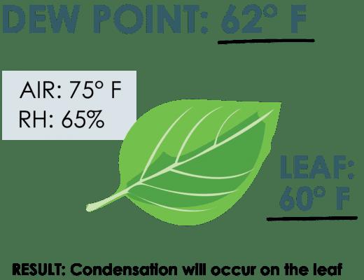 Thông số điểm sương trên lá